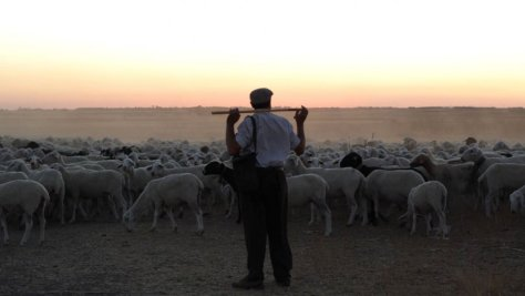 the_shepherd_-h_2016